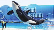 Florida Animal Attraction Guide: Miami Seaquarium