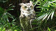 Florida Animal Attraction Guide: Audobon Center for Birds of Prey, Maitland