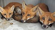 Florida Animal Attraction Guide: Back to Nature Wildlife Refuge, Orlando