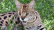 Florida Animal Attraction Guide: Peace River Refuge and Ranch, Zolfo Springs