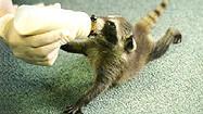 Florida Animal Attraction Guide: Wildlife Sanctuary of Northwest Florida, Pensacola
