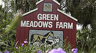 Florida Animal Attraction Guide: Green Meadows Petting Farm, Kissimmee