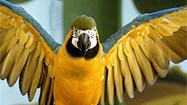 Florida Animal Attraction Guide: Sarasota Jungle Gardens