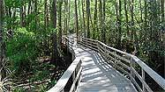 See the orchids? Don't delay -- head to Corkscrew Swamp Sanctuary