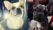 Couple asks for help finding dogs missing after burglary