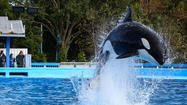Attendance slips at SeaWorld parks, but company reports record annual earnings