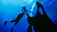 SeaWorld to replace Shamu show in 2011