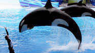 Pictures: Preview of new Shamu show at SeaWorld Orlando -- One Ocean