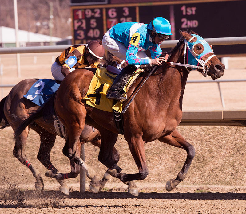 Steady N Love wins the $100,000 Caesars Wish Stakes for 3-year old fillies Saturday at Laurel Park.