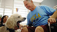 Therapy dogs make the rounds in more healthcare settings