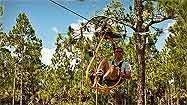 Florida EcoSafaris goes out on a limb with Cypress Canopy Cycle