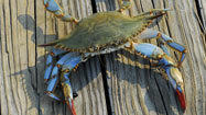 Escape plan: Crab week at Chesapeake Hyatt