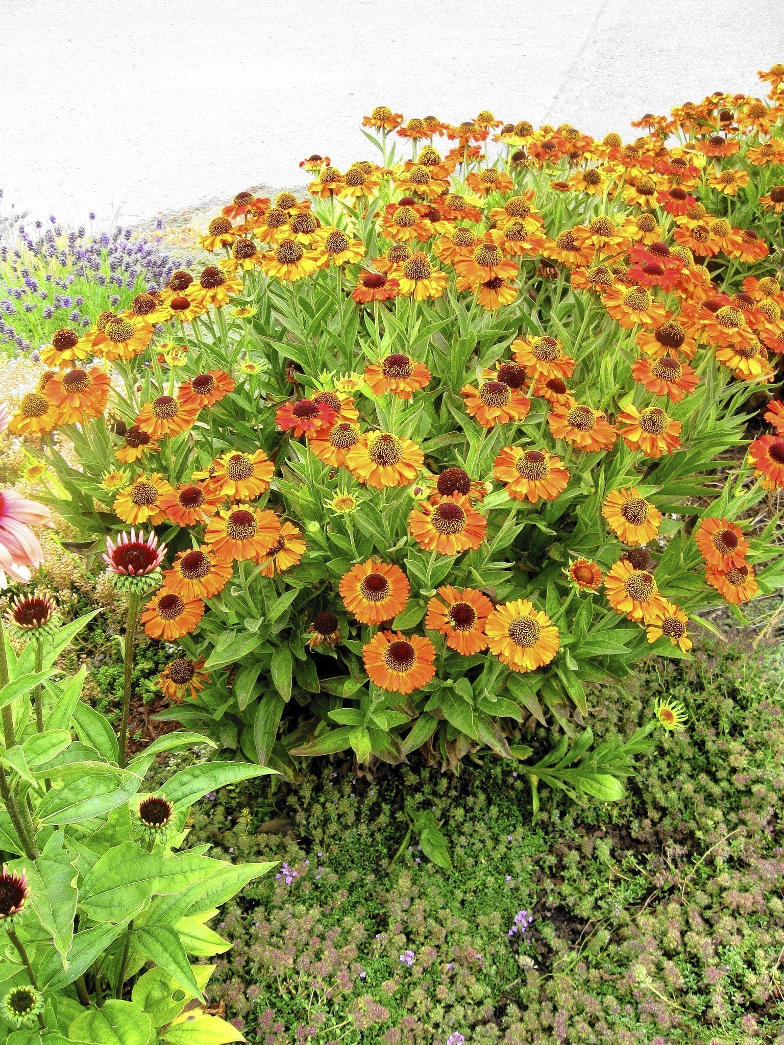 Colorful Plants For Your Garden Chicago Tribune