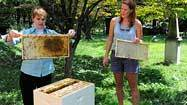 University of Maryland launches beehive project in city cemetery