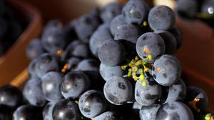 Grape seed shows small effect on blood pressure