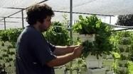 'God's diet plan': Health food is organic farmer's ministry