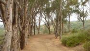 L.A. Walks: Will Rogers State Park