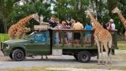 Busch Gardens: Get free Serengeti Safari with ticket deal