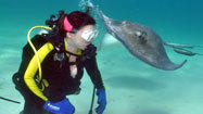 Scuba diving may hold promise for paraplegics