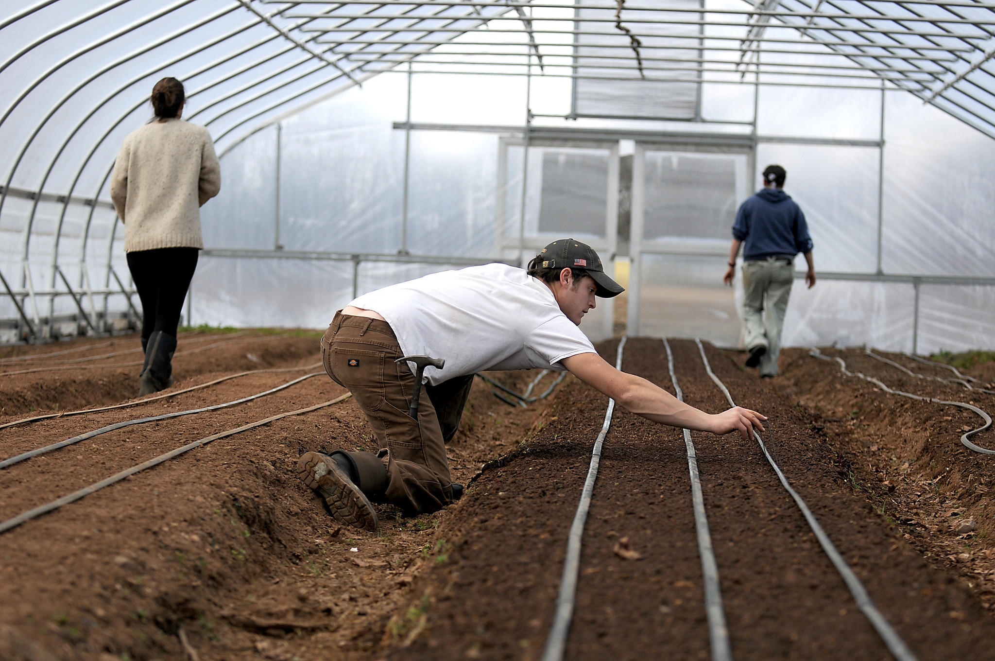 Andy Billipp reaches over to place a retaining clip into the soil to hold the irrigation lines he just finished connecting in one of the greenhouses at Eddy Farm in Newington he runs with his wife Haley.