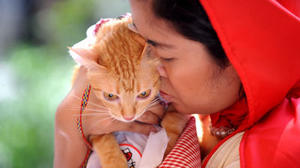 Getting a cat ups allergy risk in adults