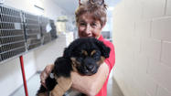 Pictures: Pet Rescue by Judy unveils new adoption center