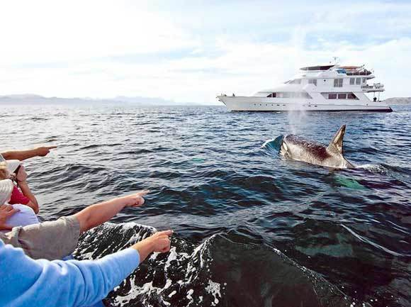 An orca surfaces while tourists look from a cruise ship.