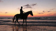 Ocean City may allow horseback riding on beach during off-season