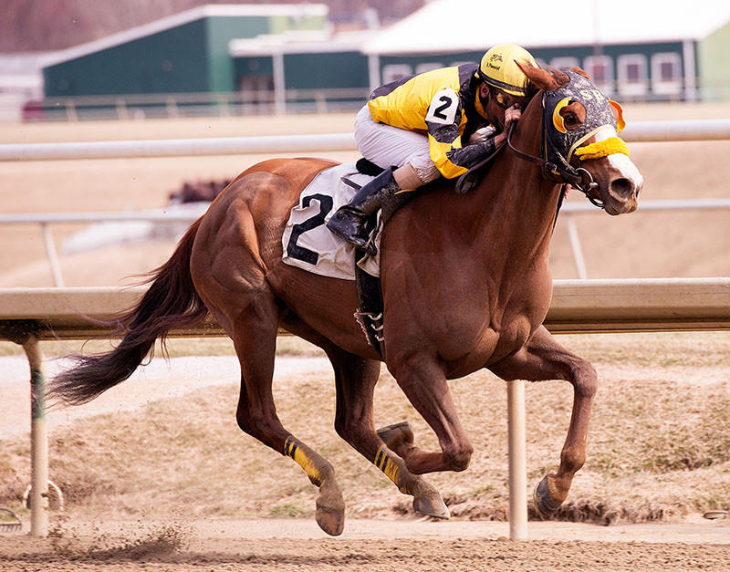 More Than a Cruise carried him from last to first to win the $100,000 Conniver Stakes at Laurel Park.
