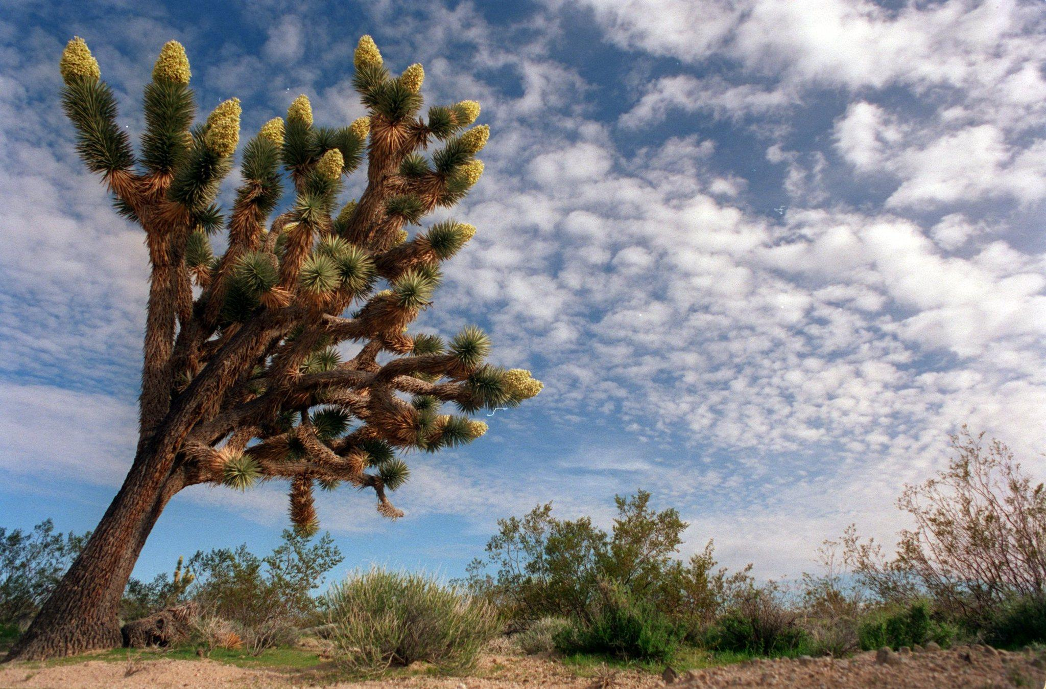 The National Geographic Society named the Mojave Desert one of the world's 100 most scenic places in 2013.