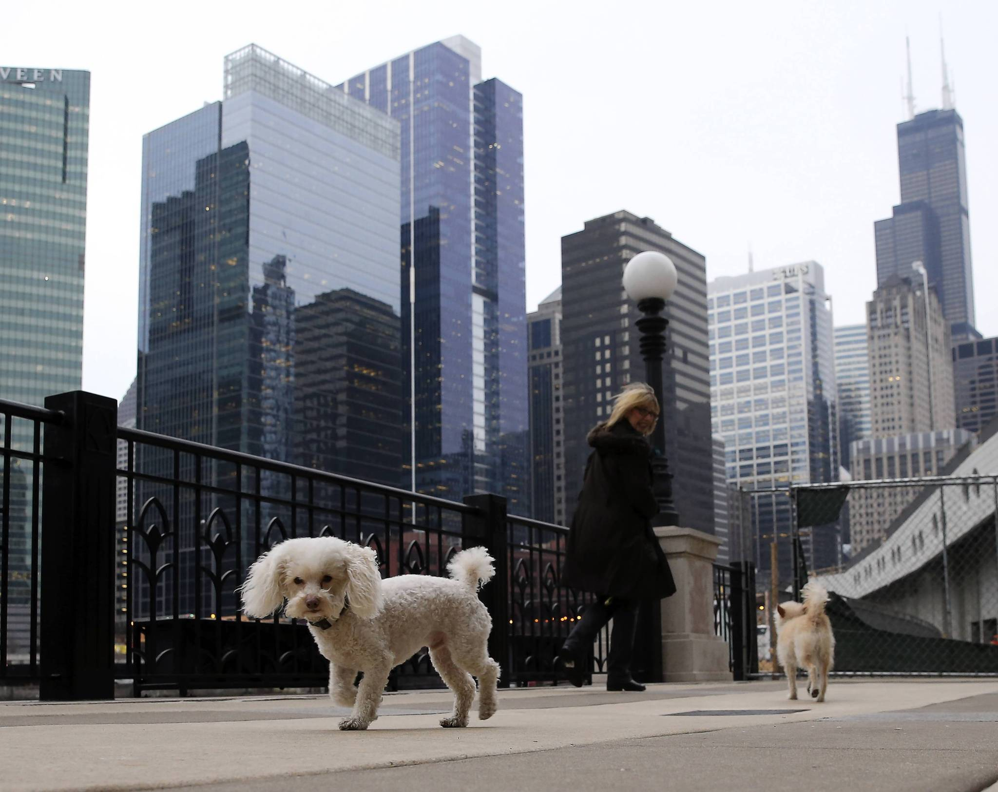 Linda Zager and her dogs, Cooper and Caleb, go for a walk outside of her building at 333 N. Canal St. in Chicago.
