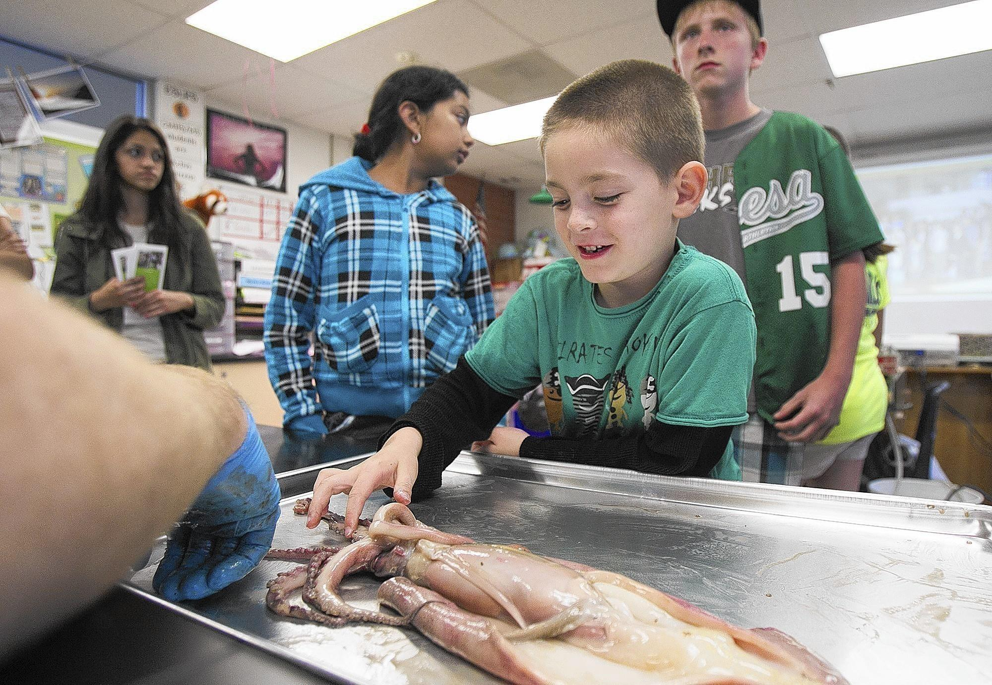 Michael Fink, left, an environmental field studies and life science teacher at Costa Mesa High School, shows Cash Gorke, 5, a kindergarten from Paularino Elementary School, a squid during a science night at Costa Mesa High School on Thursday. (Scott Smeltzer, Daily Pilot)