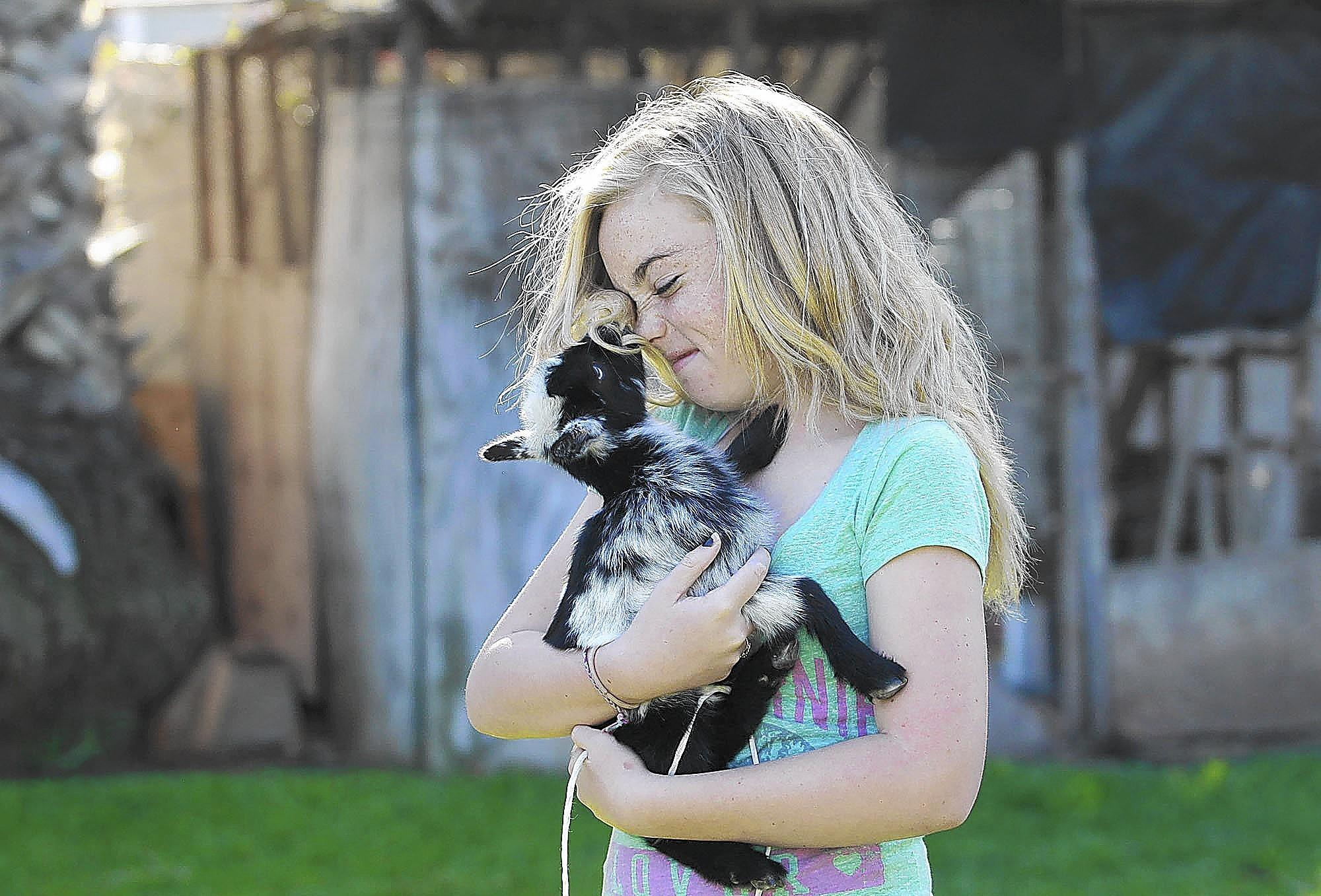 Reagan Krause, 13, cuddles up with a baby goat named Willow as she and other students take part in the 4H program at a home in Santa Ana Heights.