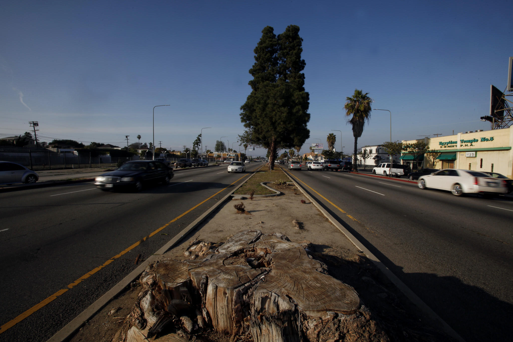 In an era when most communities are trying to preserve trees and expand its green footprint, residents along the Crenshaw Corridor in South Los Angeles are fighting to keep the little greenery it has.