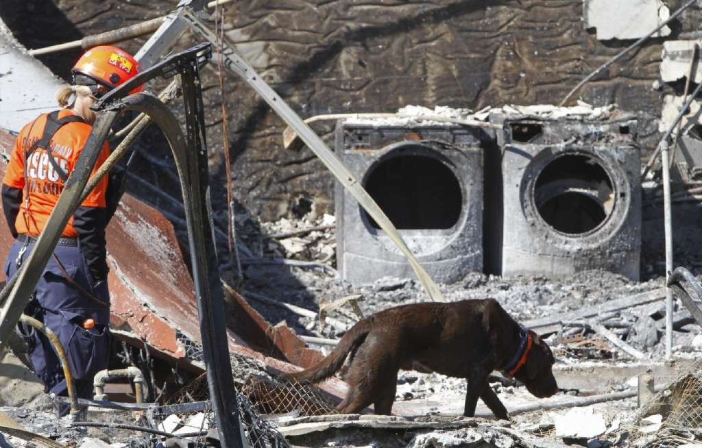 The toll of greed and stupidity: A search dog looks for survivors of the 2010 blast of a PG&E pipeline in San Bruno.