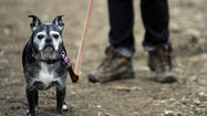 The app says 'woof': Technology eases worries for pet owners
