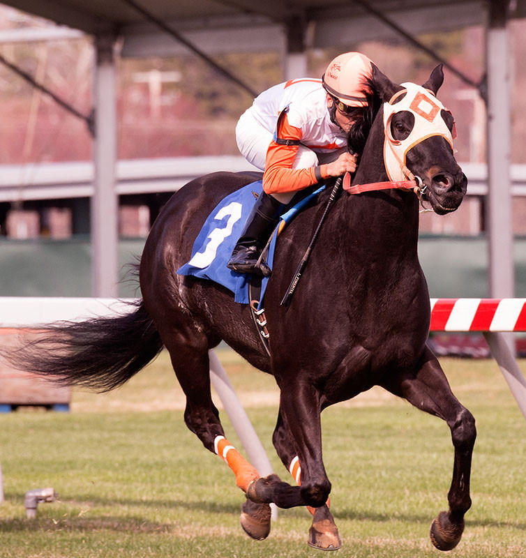 Ben's Cat wins the Mister Diz Stakes at Pimlico Race Course for the fifth straight year.