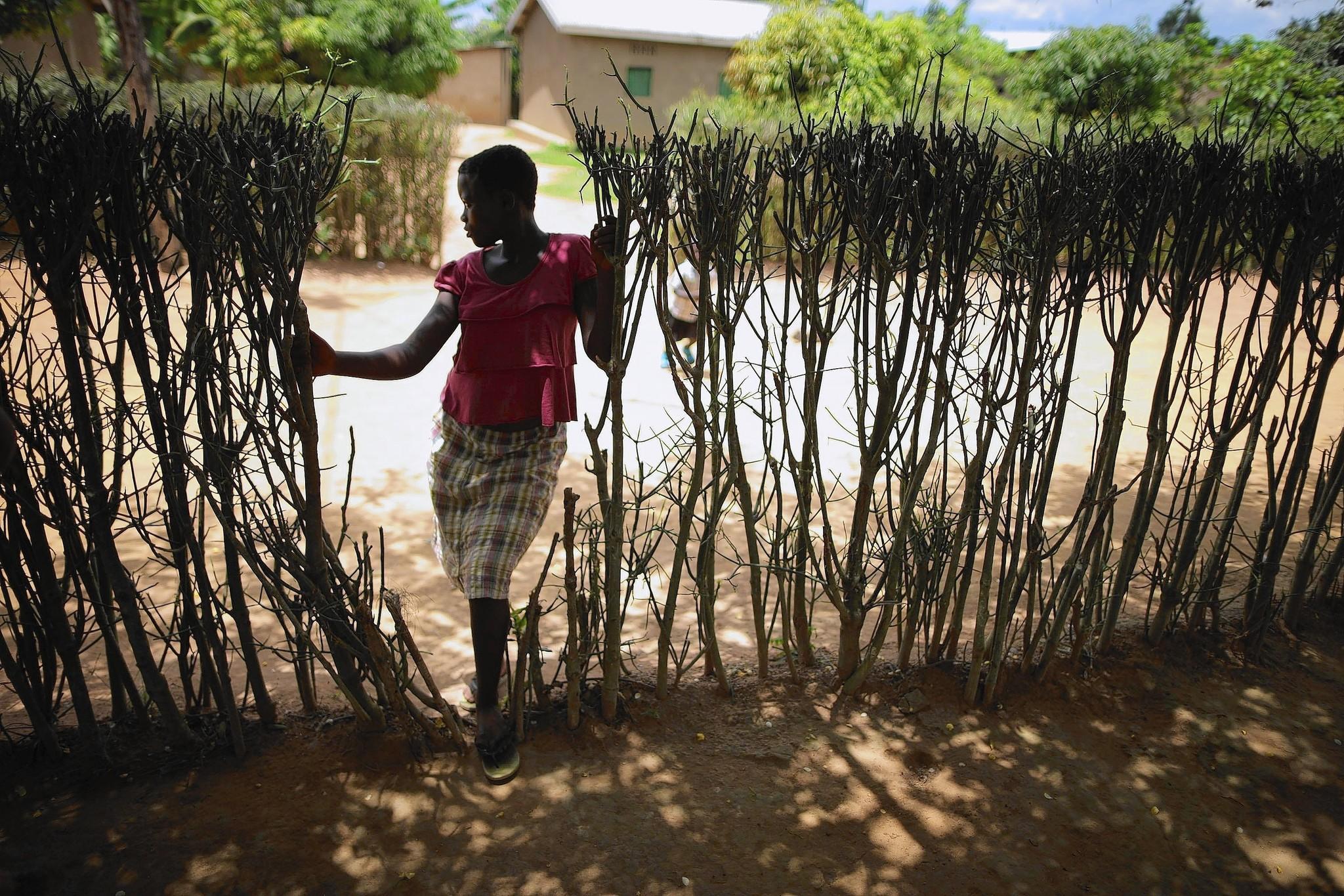 Holocaust and rwandan genocide essay