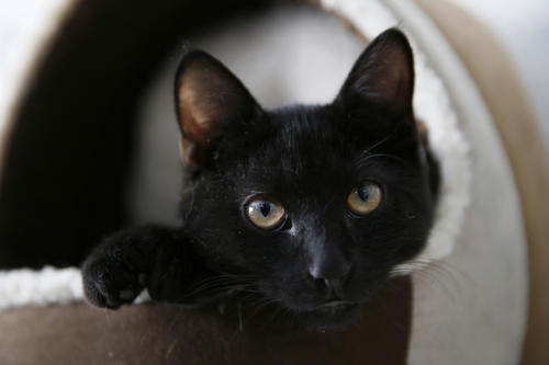 A cat sits in a basket at the Lady Dinah's Cat Emporium in London March 28, 2014.