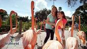 Theme parks: Things to do before it gets too darn hot!