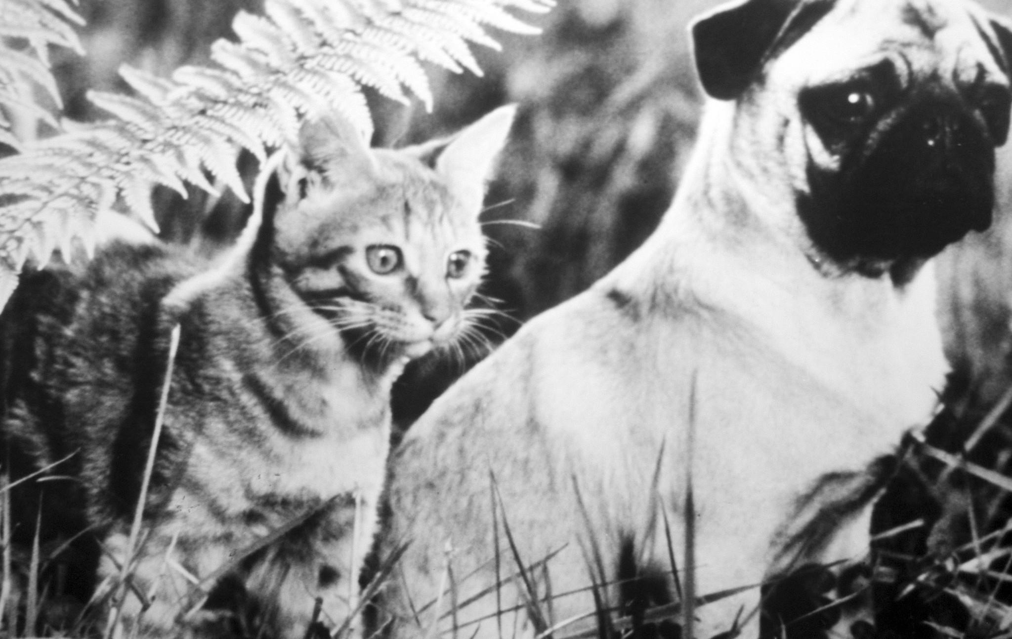 """A scene from the 1986 movie """"The Adventures of Milo and Otis,"""" about Milo, a kitten, and Otis, a puppy, is shown. Mars Inc. is buying most of Procter & Gamble's pet food assets and venturing deeper into the business of feeding people's cats, dogs and other pets."""