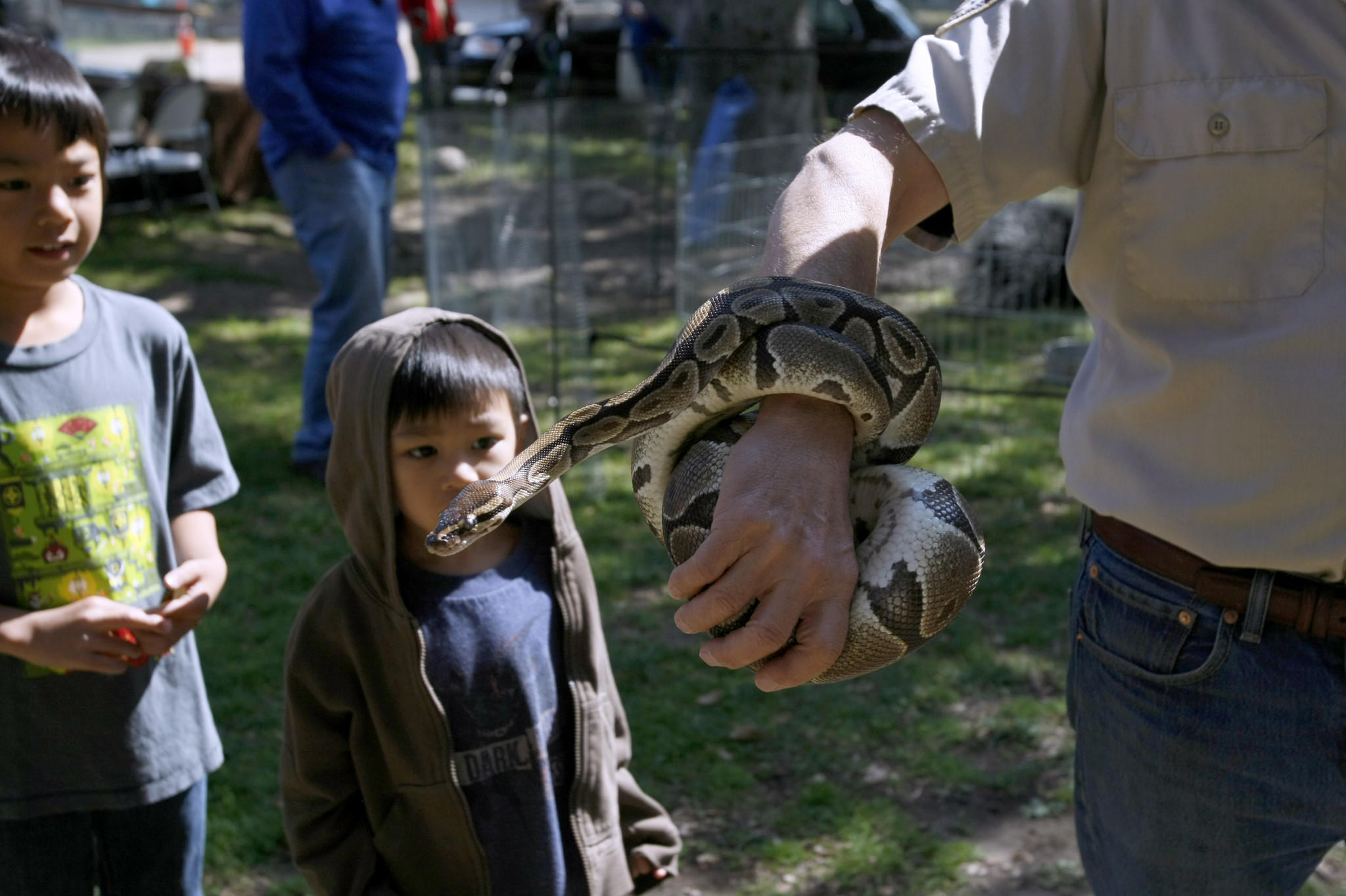 Brothers Mateo Soriano, 8, left, and Joaquin Soriano, 5, right, take a close look at a ball python snake at the annual Hometown Country Fair at Crescenta Valley Park in La Crescenta on Saturday, April 5, 2014.
