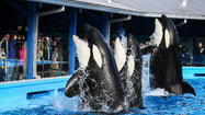 SeaWorld loses appeal in killer-whale case