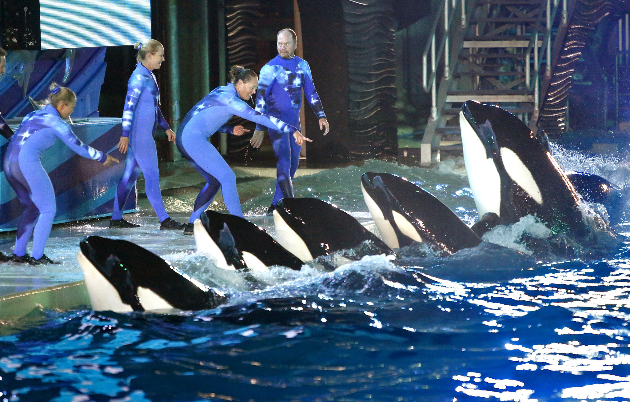 SeaWorld loses bid to put trainers back in water for killer-whale shows