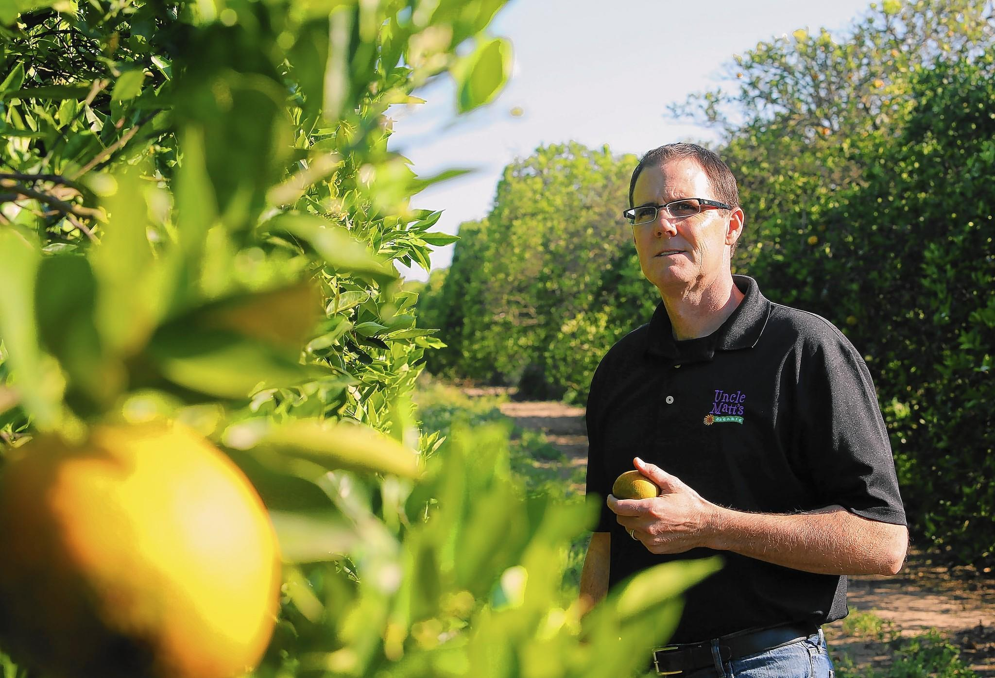 Organic citrus grower Matt McLean is pictured in a family grove south of Clermont, Fla.
