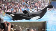 Blackstone stepping back from stake in SeaWorld