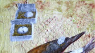 Art exhibition linking passenger pigeon, Jewish heritage comes to Ryerson Woods May 4