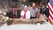 T. Rex gets new home at Smithsonian [Video]