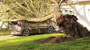 Video: Tree Fell on Car In Hampton