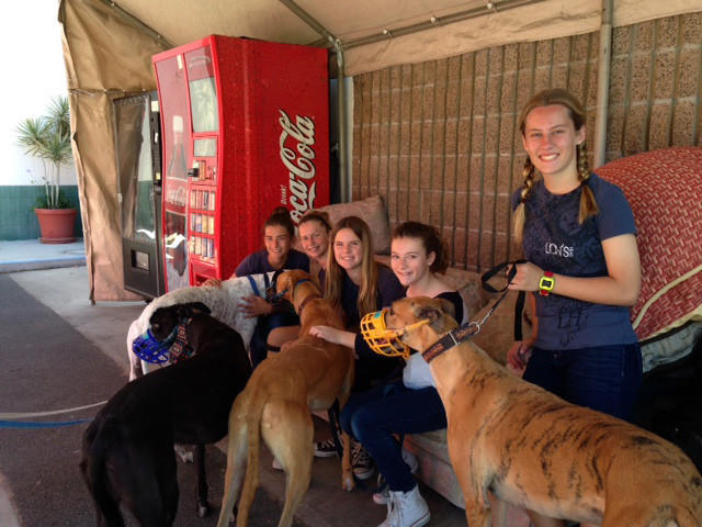 A group of Thurston Middle School girls walked and played with dogs at Hemopet, which doubles as a greyhound rescue and canine blood bank, in Garden Grove. Pictured left to right are: Sarah Hollinshead, Chloe Schaefgen, Kate Gilles, Molly Cohn, and Mia Pitz.